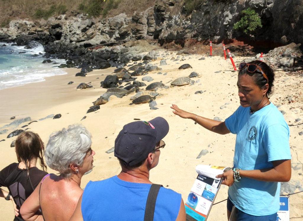 hawaiian-green-sea-turtle-honu-watch-hawaii-wildlife-fund