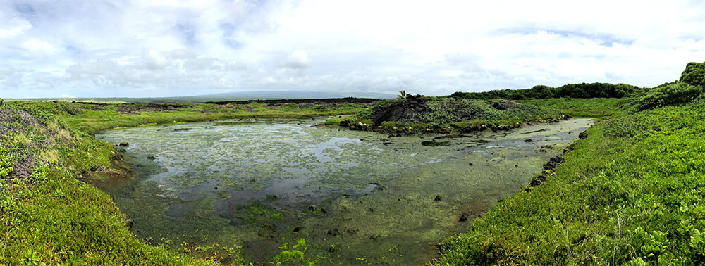 anchialine-ponds-coastal-restoration-hawaii-wildlife-fund