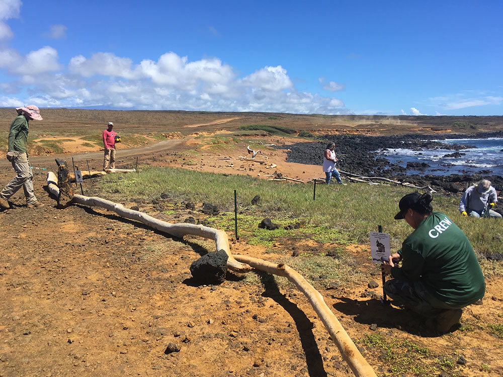 coastal-restoration-hawaii-wildlife-fund