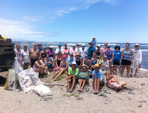 Marine Debris Removal Projects