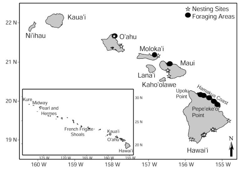 short-range-movements-of hawksbill-seas-turtles