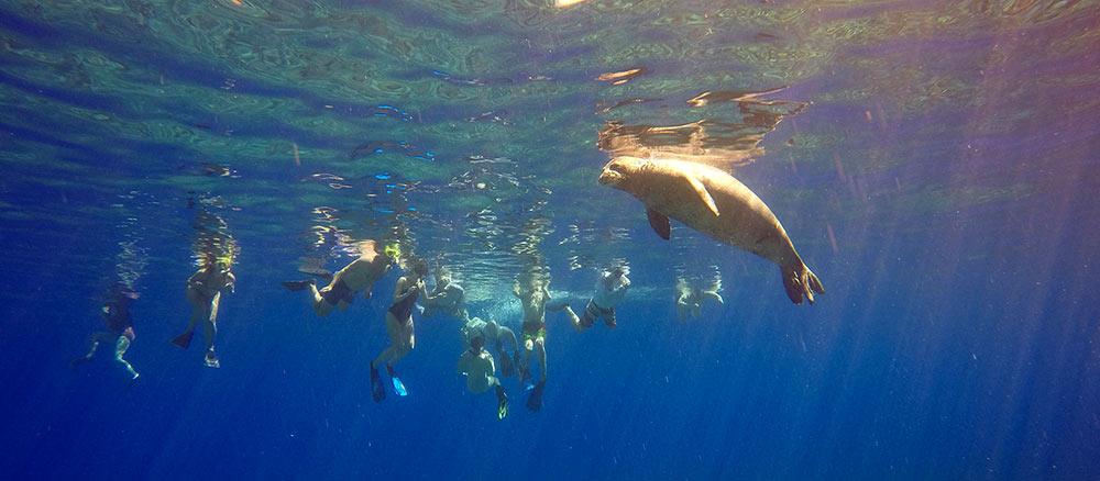 2-hawaiian-monk-seal-maui-david-taylors-kai-kanani