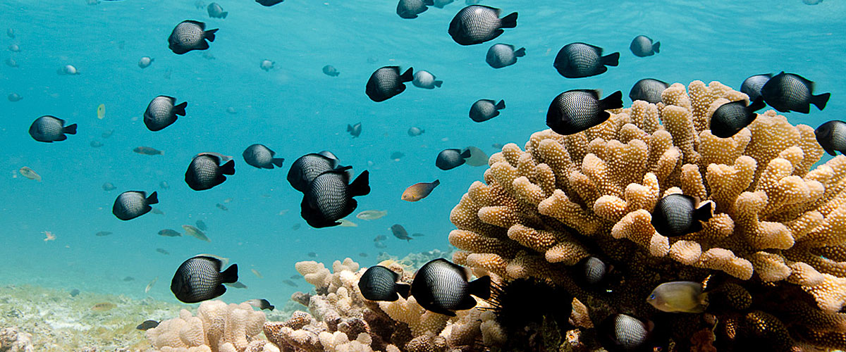coral-reefs-hawaii-wildlife-fund-header