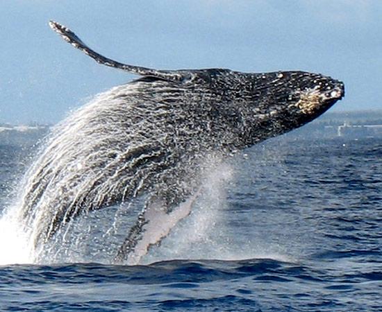 Donate - Hawaiʻi Wildlife Fund