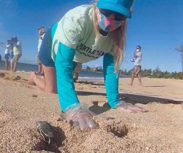 hannah-bernard-turtle-hatching-maui-hawaii-wildlife-fund