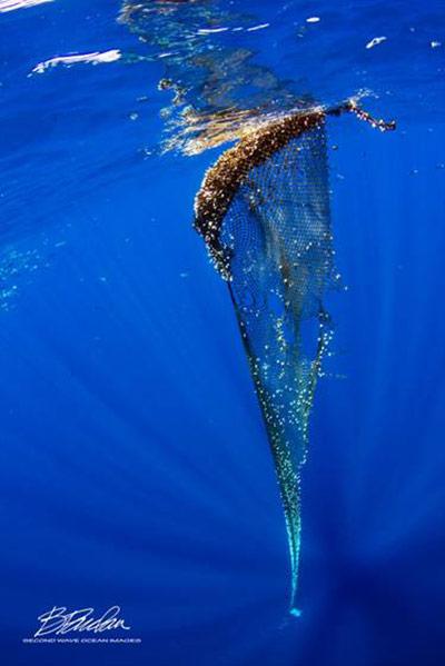 Marine net debris in Hawaiian waters