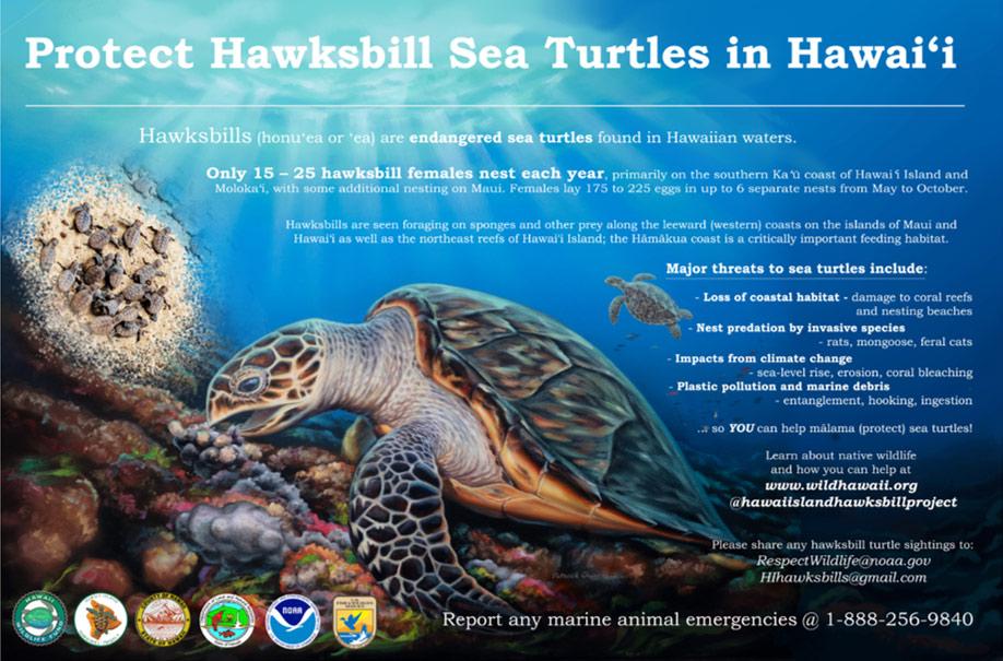 protect-hawksbill-sea-turtles-in-hawaii-sign-hawaii-wildlife-fund