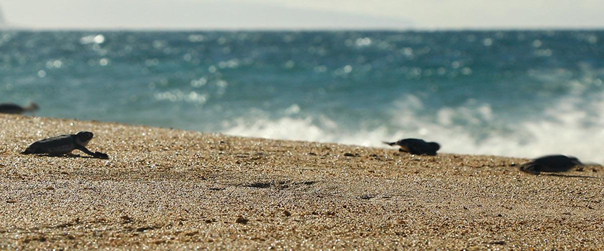 respecting-wildlife-hawaii-wildlife-fund-header